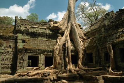 Potężne korzenie oplatające mury Ta Prohm, źródło: flickr