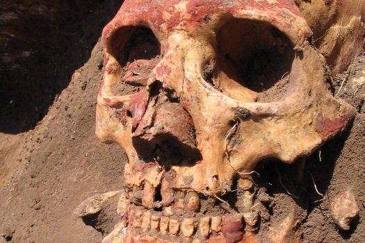czaszka Samara