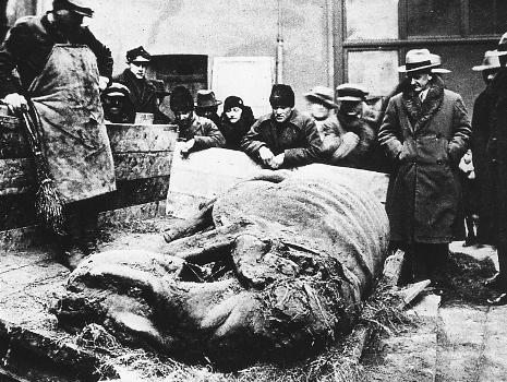 Nosorożec włochaty Starunia 1929
