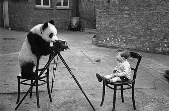 Panda fotograf