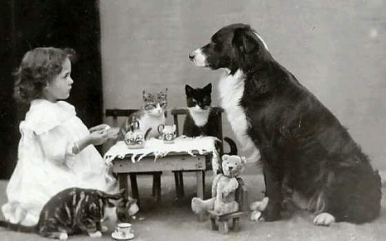Animal tea party, c.1903-1910