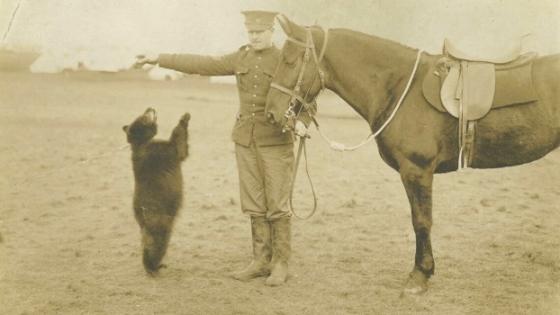 Niedźwiedzica Winnipeg