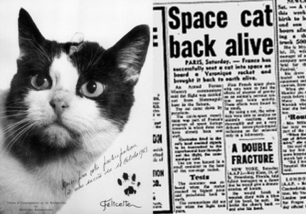 Felicette kotka w kosmosie