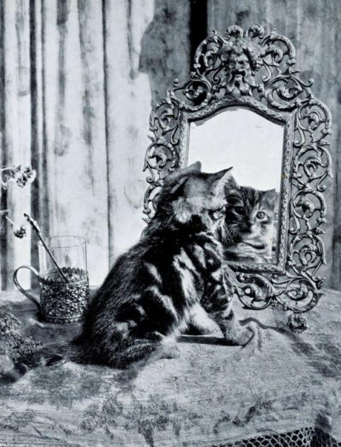 Kot-w-lustrze-1942