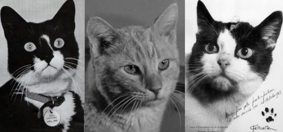 koty w historii