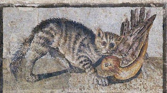 rzymska mozaika kota