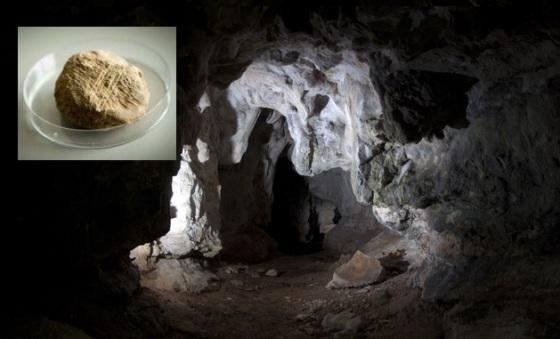 jaskinia-alice-gwendoline-rzepak-niedzwiedzia