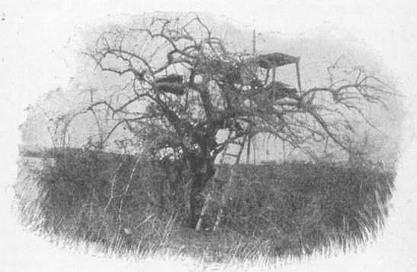 stanowisko strzeleckie na drzewie