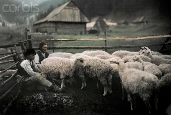 1932, Zakopane, Poland --- Gorals tend to their corralled flock --- Image by © Hans Hildenbrand/National Geographic Society/Corbis
