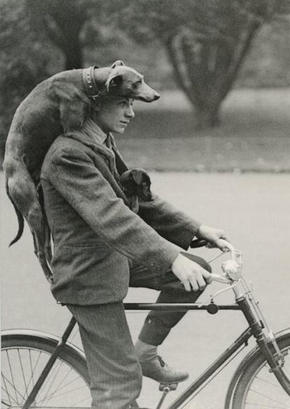 Przejadzka rowerem z dwoma psami