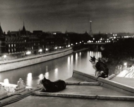 Paryskie koty noc 1954