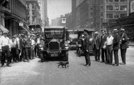 1925 nowy jork kotka i kociatko