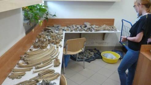 kości nosorożca Boguslaw Przybylski