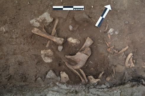 Kości zwierząt znalezione we wnętrzu. Fot. Paweł Duma