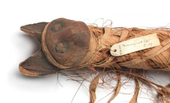 mumia-kota-natural-history-museum-london-science-photo-library