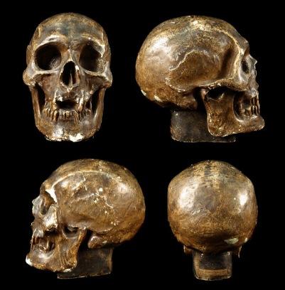 czaszka-roberta-brucea