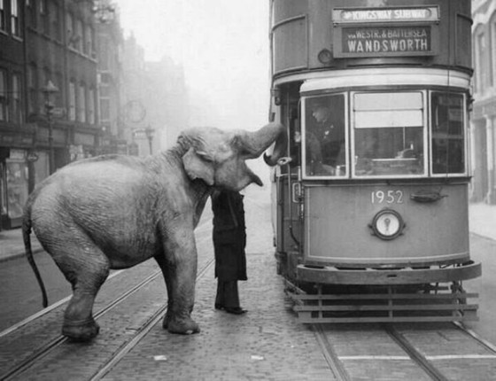 slon-zatrzymyje-tramwaj-londyn-1936