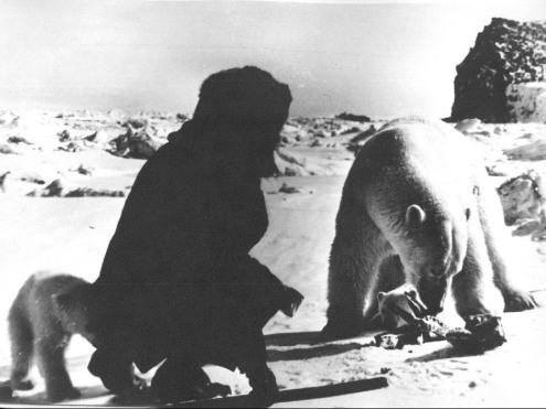 czukotka-lata-50-60-maly-niedzwiadzek-szukajacy-cos-za-plecow-badacza
