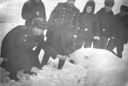czukotka-lata-50-zolnierze-radzieccy-dokarmiajacy-niedzwiedzia-polarnego