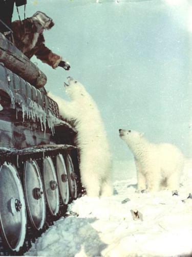 czukotka-lata-50-radziecki-naukowiec-karmi-z-czolgu-niedzwiedzie-polarne