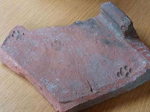 slady-kocich-lap-na-rzymskiej-dachowce-sprzed-2000-lat