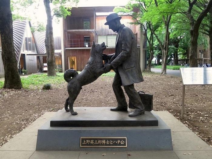 pomnik profesora ueno i hachiko przed kampusem